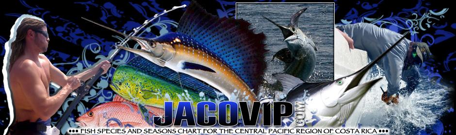 Jaco vip costa rica fishing calendar seasons and species for Costa rica fishing calendar
