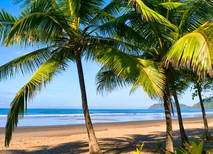 Jaco Beach, pacific ocean, and palm trees